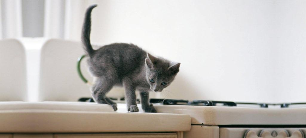 chat-grimpe-partout