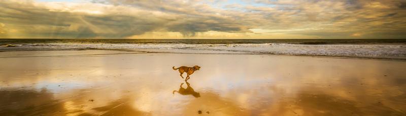 Chien à la plage, conseils et risques pour votre chien à la plage