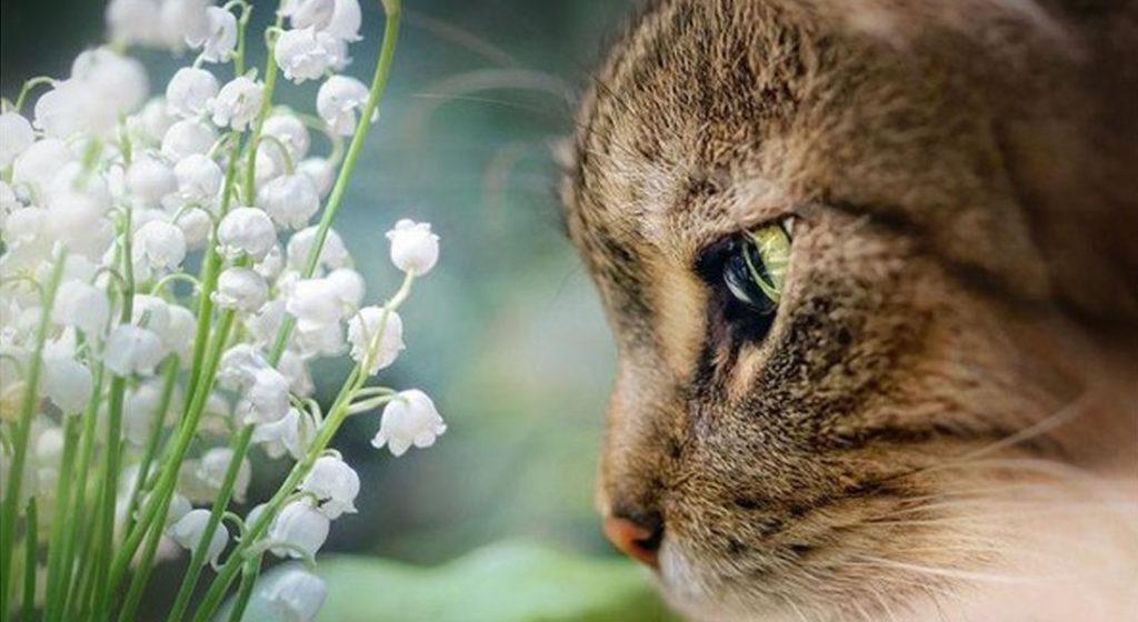 muguet toxique chat chien