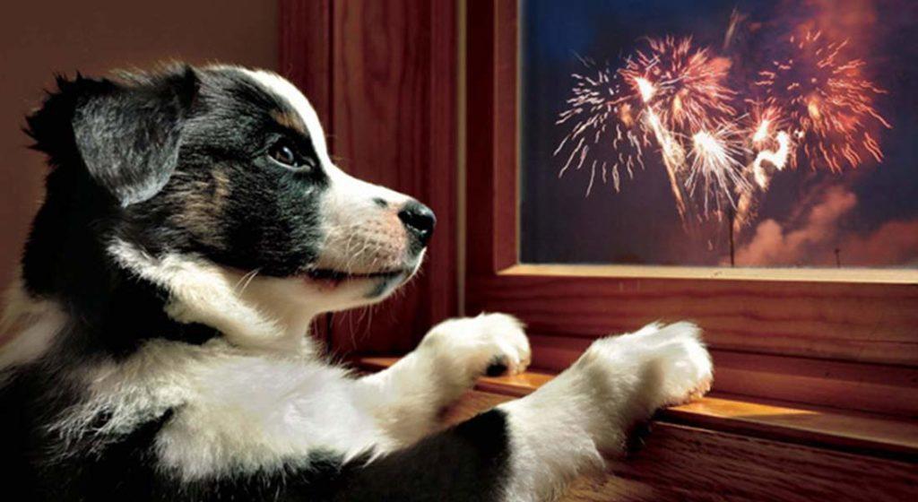 feu d'artifice chien et chat
