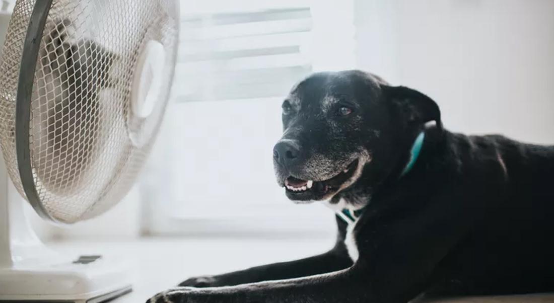 proteger son chien et chat de la chaleur