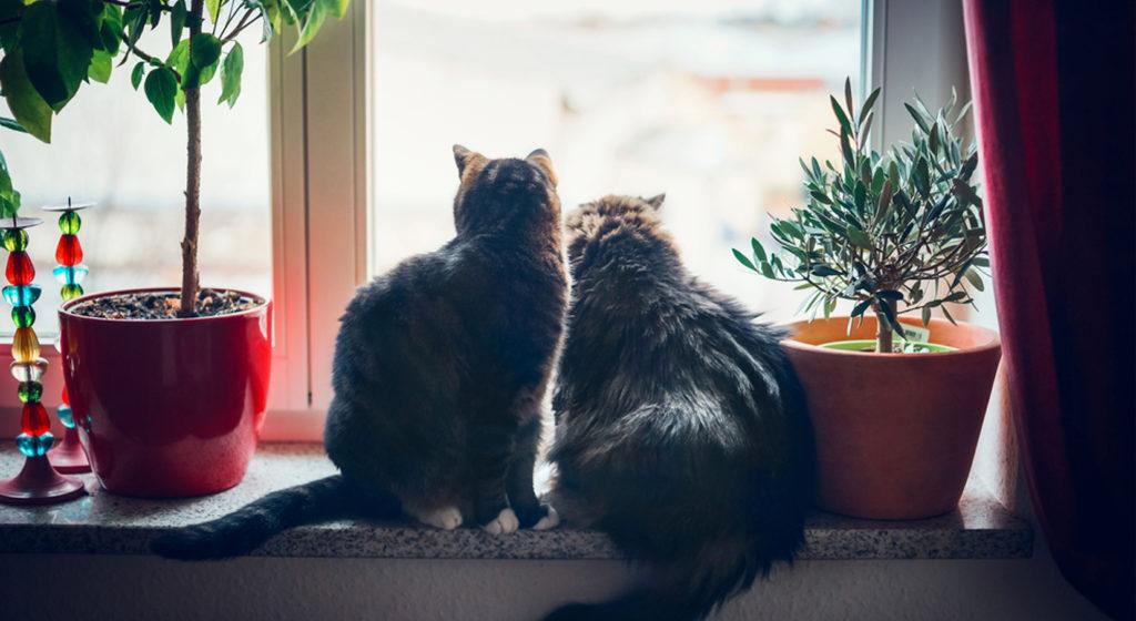 deuxieme chat comment cohabiter dans la meme maison